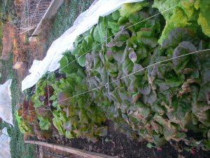 fall harvest2012 010